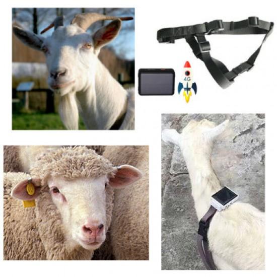 GPS tracker pre ovce a kozy 4G (pre lepšie pokrytie signálom)